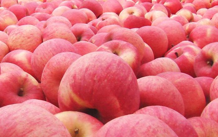 今年蘋果不好賣,難題怎麼破?