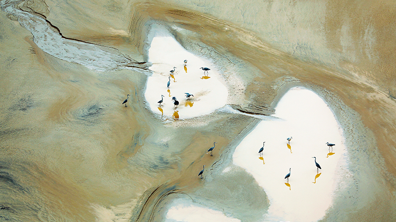 黃河岸邊,蒼鷺起舞